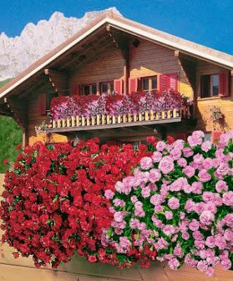 balcone con garofani