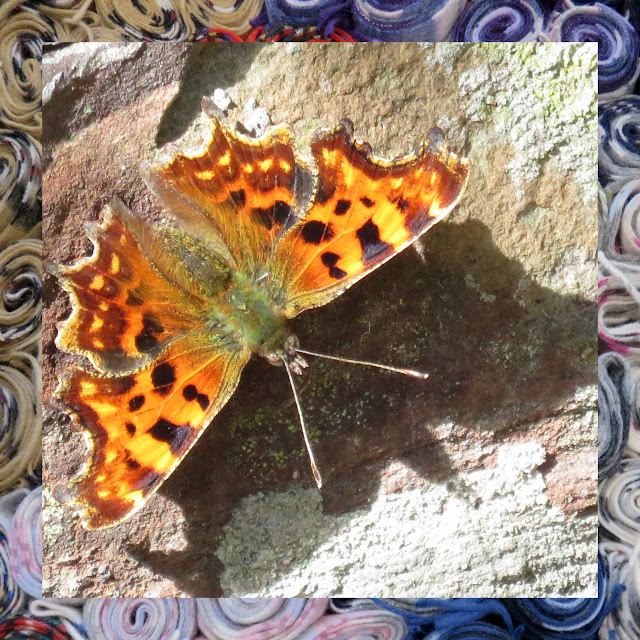 The Water of Leith in Edinburgh - Butterfly