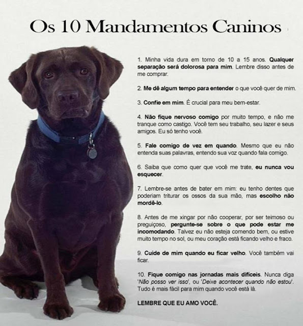 imagem de labrador - 10 mandamentos caninos