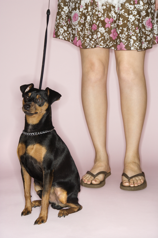 Can Collars And Choke Chains Cause Damage To Dogs