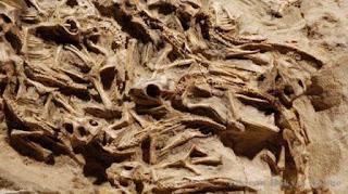 Sarang Bayi Dinosaurus Ditemukan di Mongolia