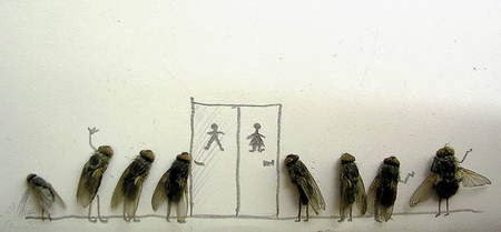 lalat pose lucu unik