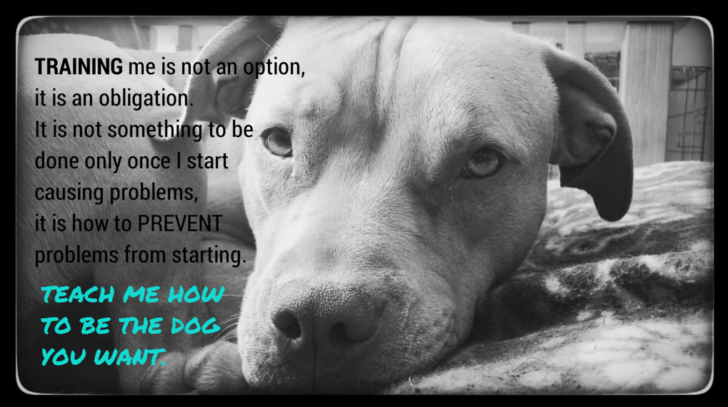 """pit bull research paper Essays research papers - pitbulls title length color rating : essay on breed-specific legislation - breed-specific legislation breed-specific legislation is the banning or restriction of dogs considered """"dangerous"""" breeds, such as pit bull breeds, in order to stop dog attacks."""