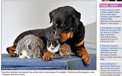 英國 最博愛 狗褓姆 救 動物