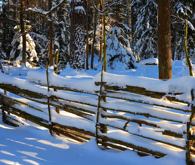 Vallaskogen Linköping