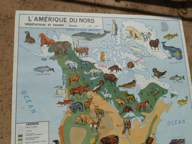 Vintage french posters botany animals anatomy old world maps from french map about north america and asia gumiabroncs Image collections