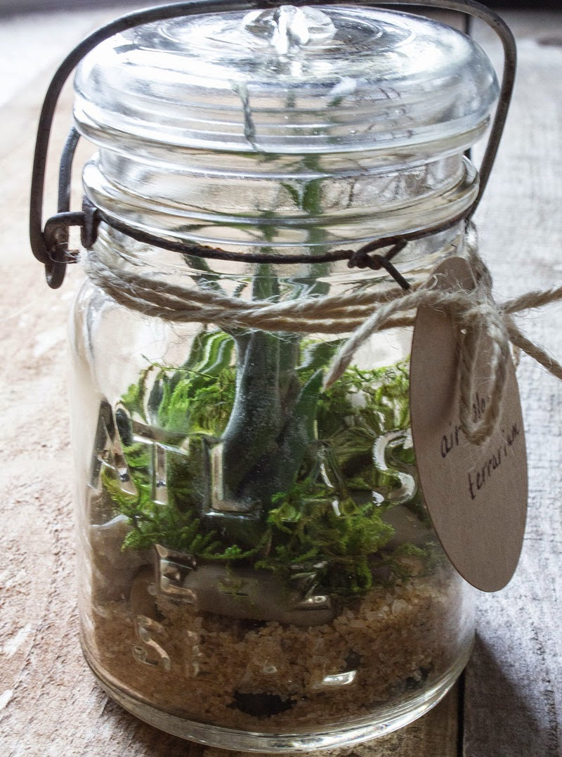 homemade terrarium air plants succulents