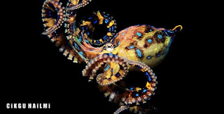 a98564 Blue RingedOctopus Gambar Haiwan Paling Cantik Tapi Paling Bahaya Di Dunia