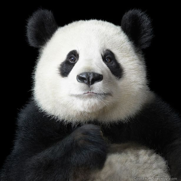 Animals Like Humans Photo Project by Tim Flach