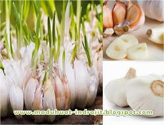 herbal tanaman bawang putih
