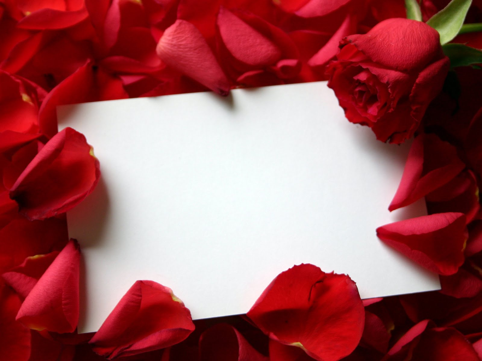 Valentine Letter Covered with  D Name Letter Wallpaper
