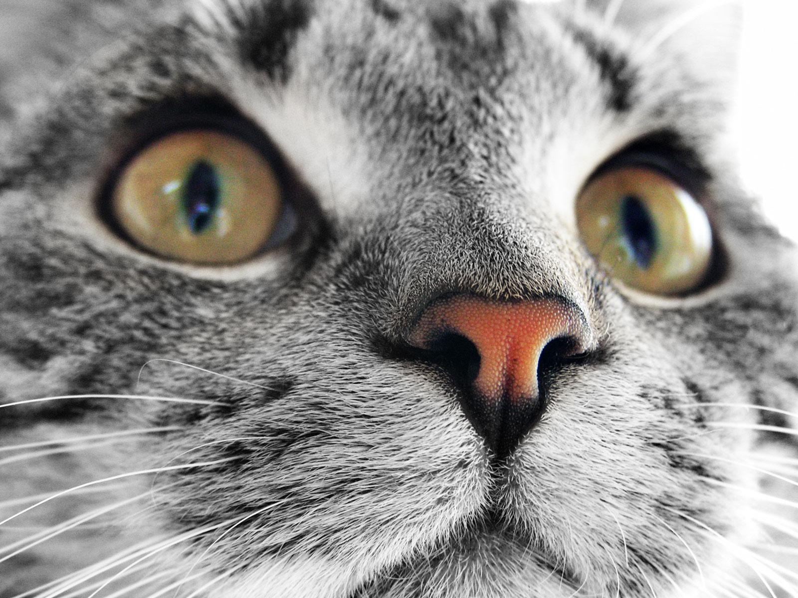 Best Desktop HD Wallpaper: Cat Desktop wallpapers