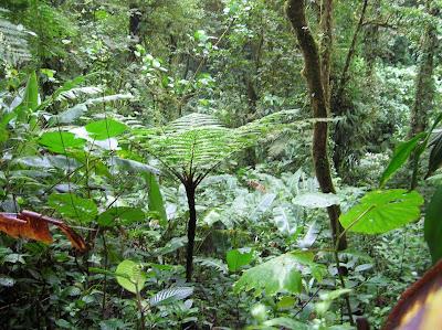 Helecho gigante, Cordillera Central, Costa Rica, vuelta al mundo, round the world, La vuelta al mundo de Asun y Ricardo, mundoporlibre.com
