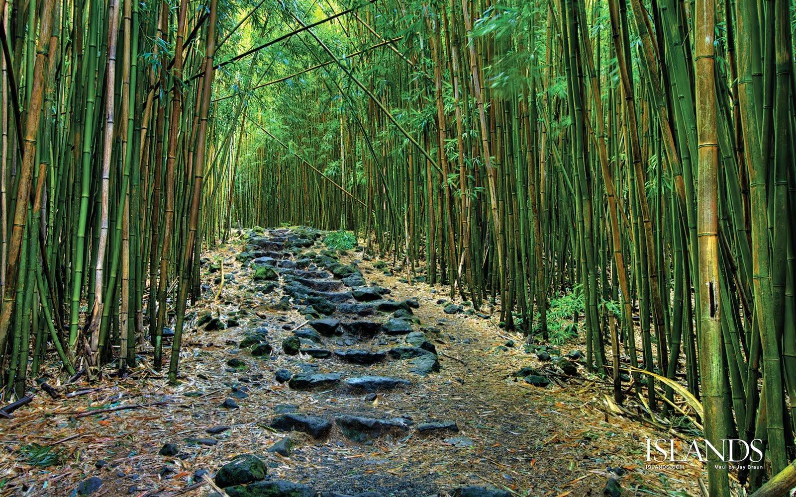 ... pemandangan hutan ini dijamin puas bagi yang melihat hutan ini semoga