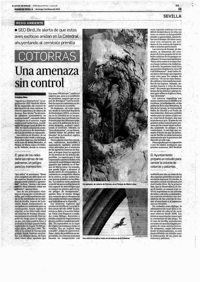 """Artículo en el Diario de Sevilla 1 de marzo de 2015: """"Cotorras, una amenaza sin control"""". SEO/BirdLife realiza un censo de cotorras."""
