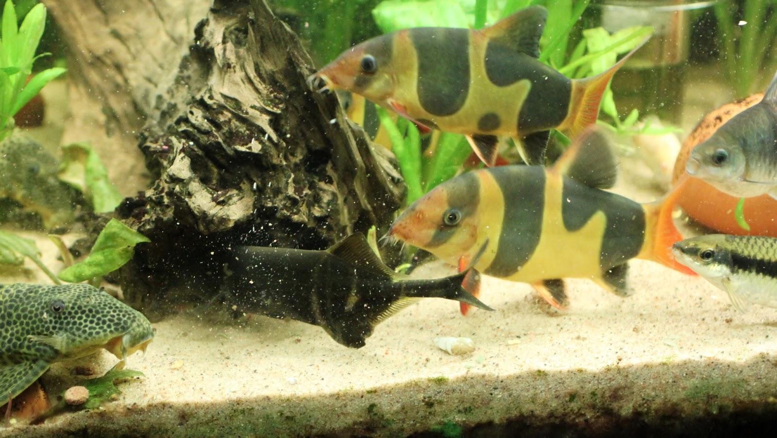 Choose the right aquarium fish food sera for Sera aquarium