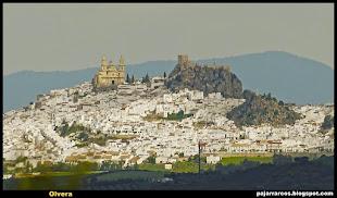 Olvera (Sierra de Cádiz)