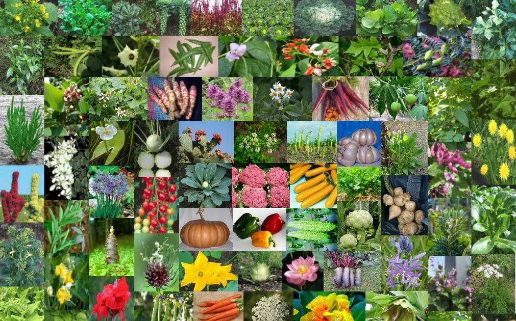 Manyaman Malinamnam Mabsi Yummy My Culinary Garden