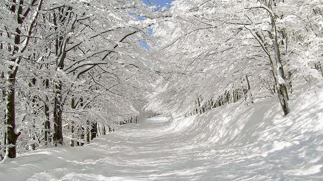 Tuyết trắng phủ kín lối mòn
