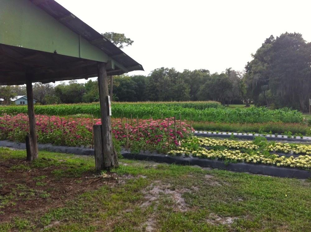 Anna Maria Island Farm to Fork