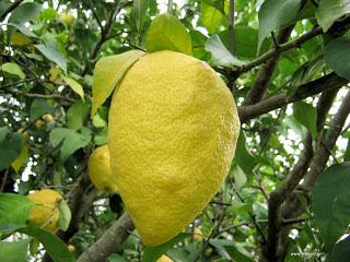 Έξυπνες χρήσεις του λεμονιού στο σπίτι