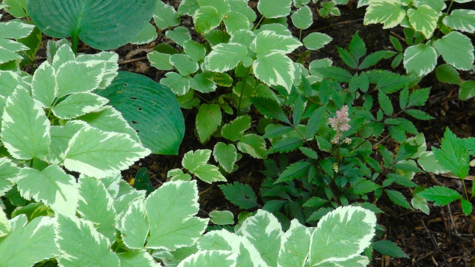 Newblog my shade loving flowering plant - House plants that like shade ...