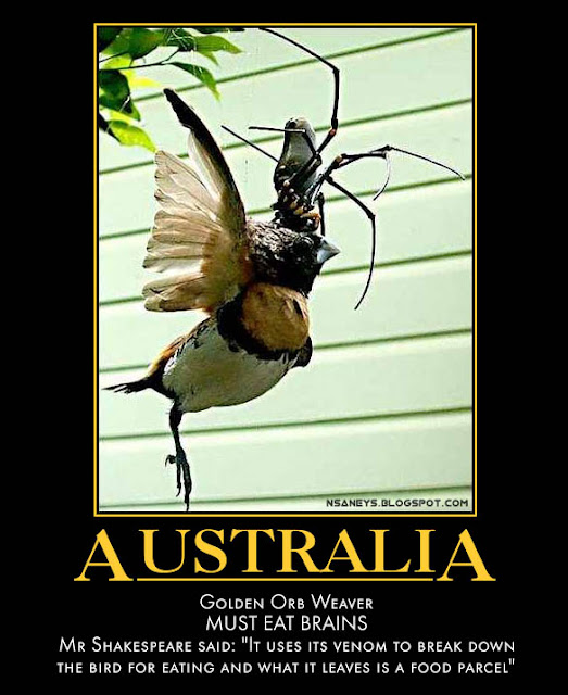 Nsaneyu0026#39;z Posters II: Australia: Giant Spider Eating a Bird ...