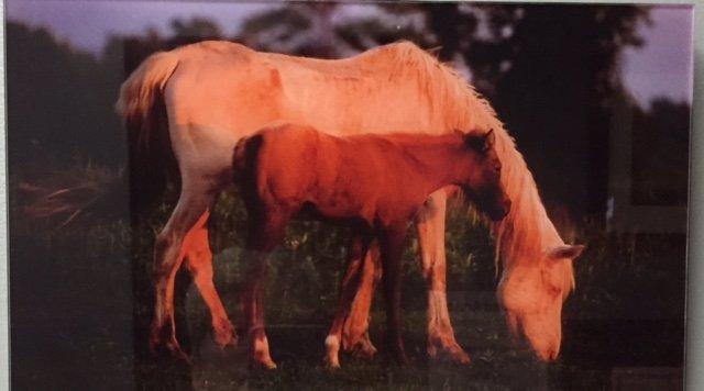 horse, colt, foal, mare, white horse, photograph, Philip Schmidt