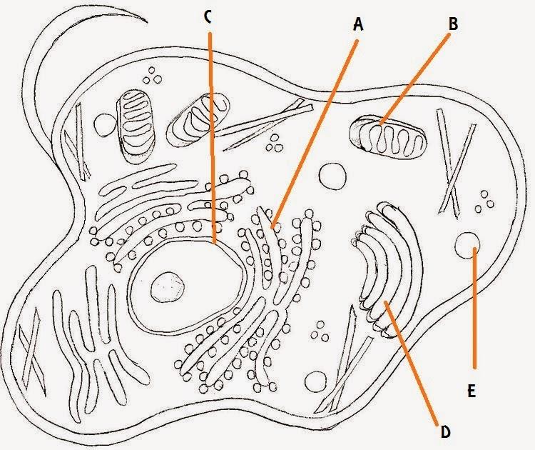 biology smk usj 13  april 2014