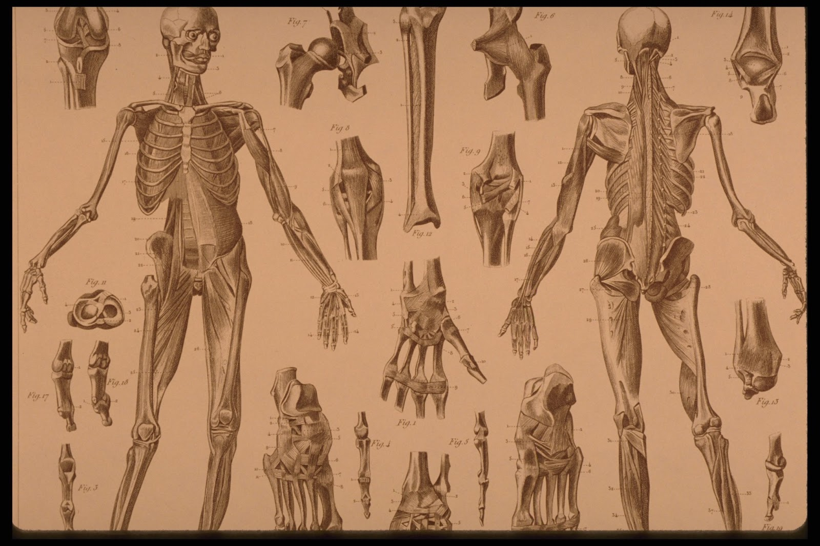 The Graffical Muse Creepy Vintage Anatomy Prints
