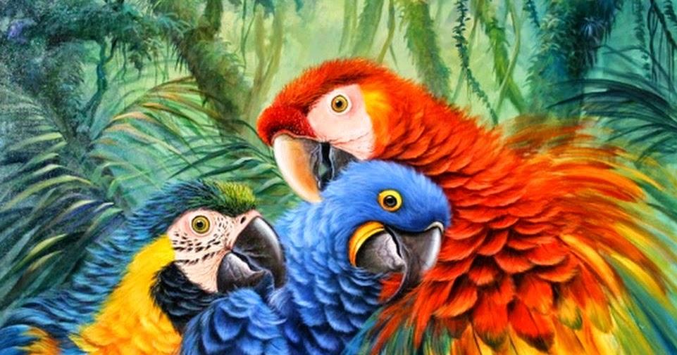 Cuadros modernos ver cuadros de loros multicolores en la - Ver cuadros modernos ...