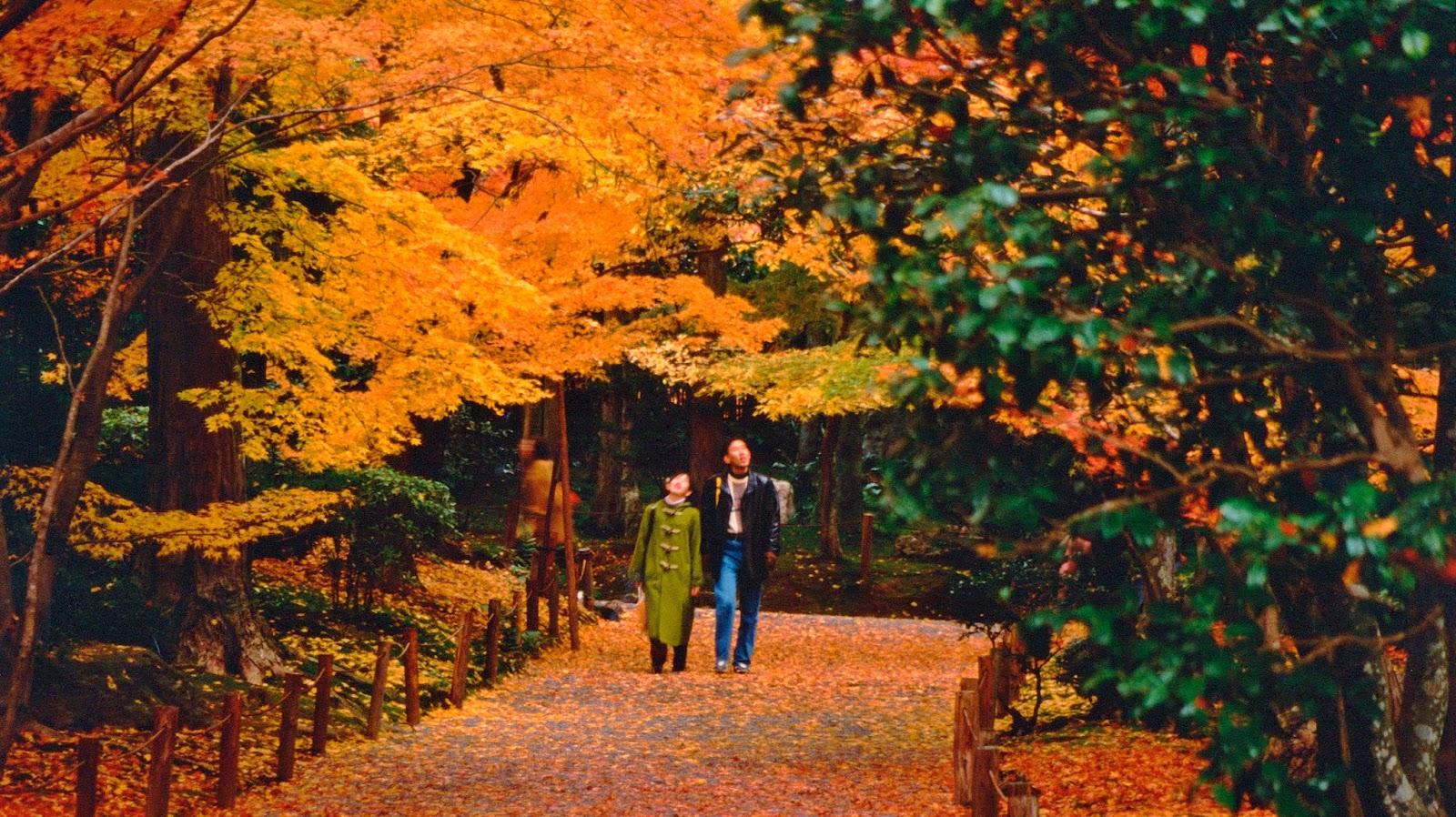Momijigari l 39 autunno in giappone nelle foto pi belle for Case in giappone