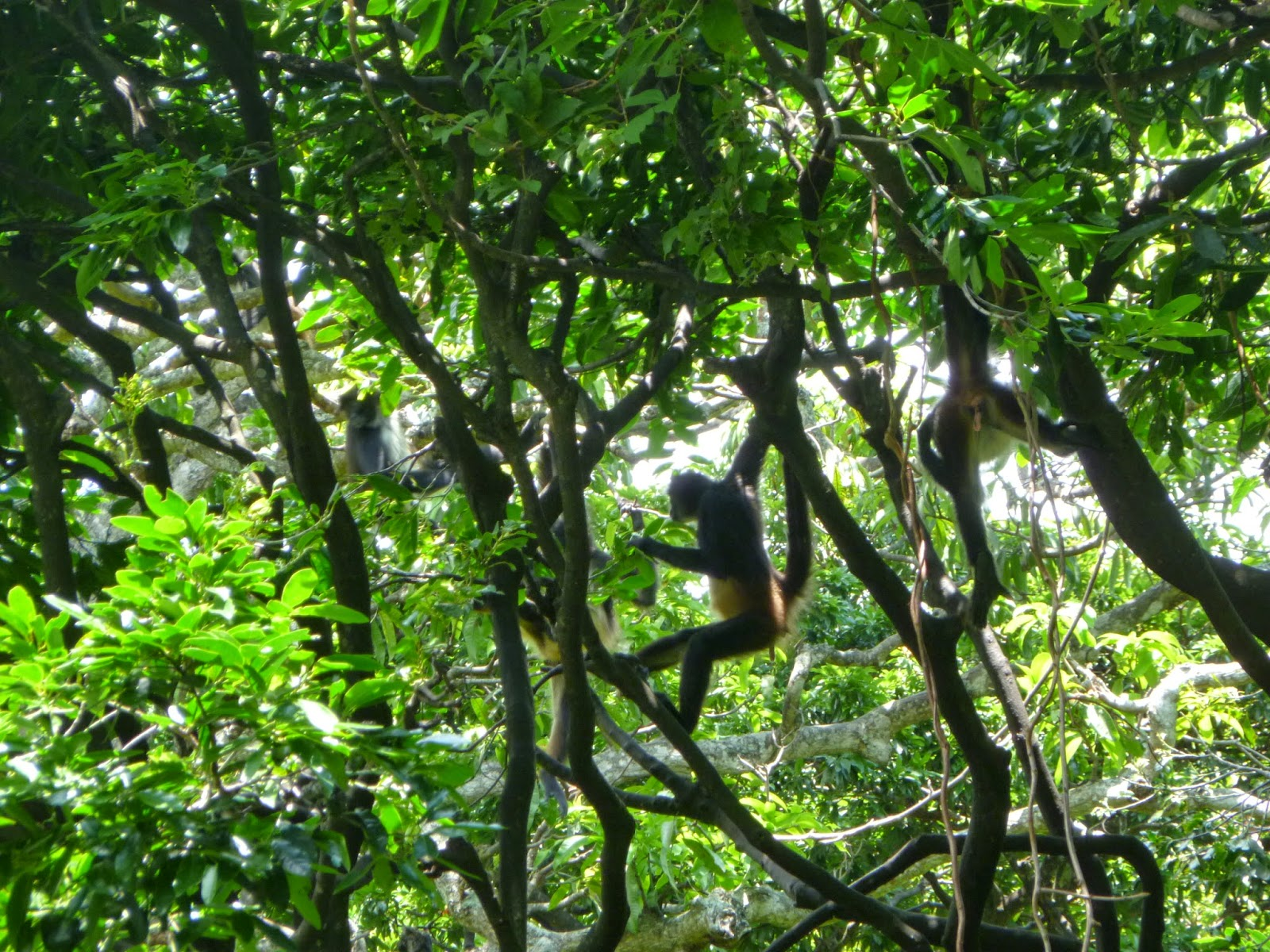 Cuida el Bosque del Zoomat