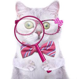 Cat With Magnifying Glass Cressida studio - Fotolia.com