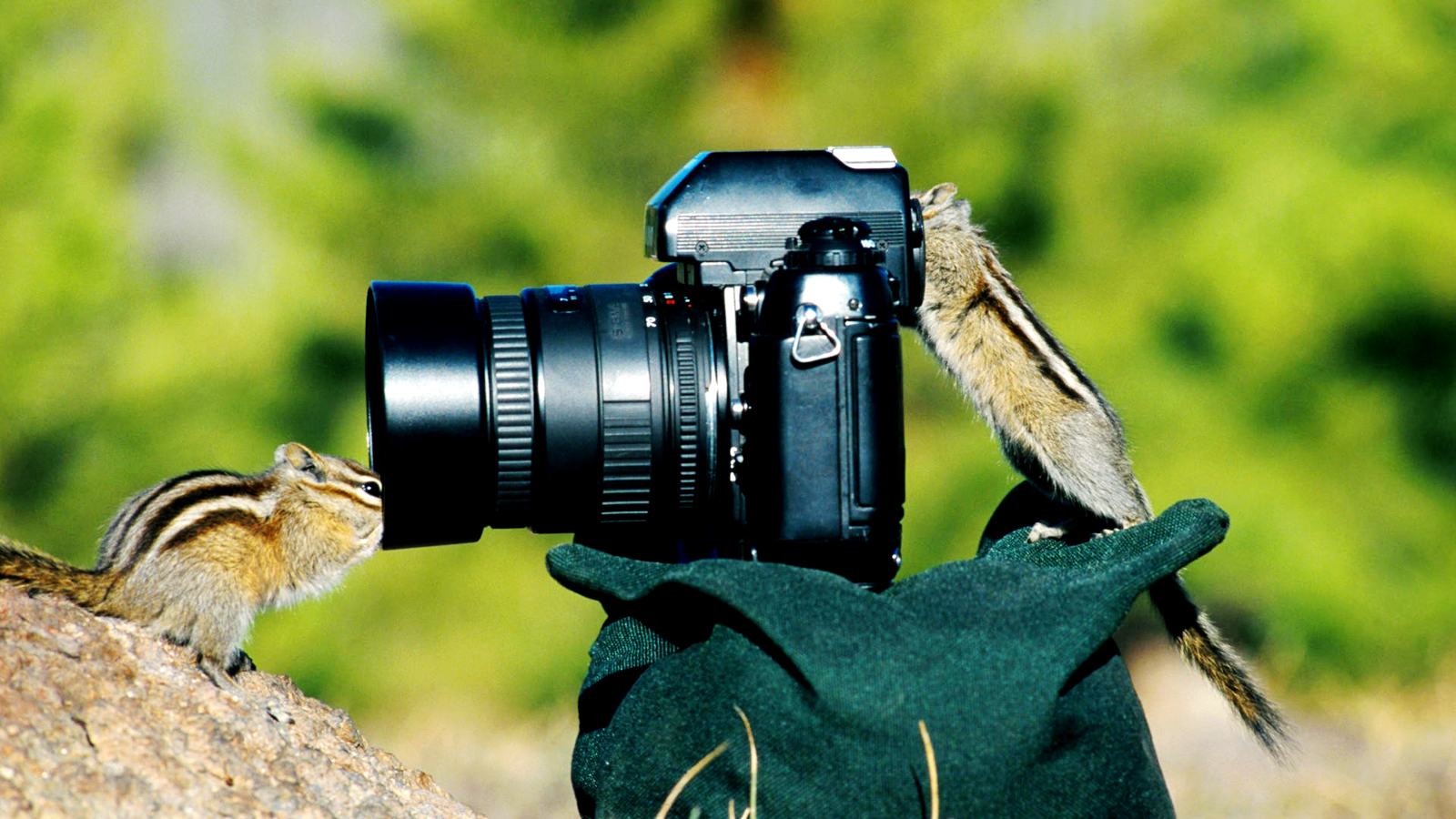 Chipmunks funny hd wallpapers hd wallpapers backgrounds - Foto in camera ...