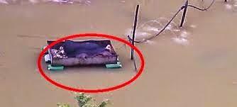 Bangkai Babi Dalam Kolam Ikan Tilapia