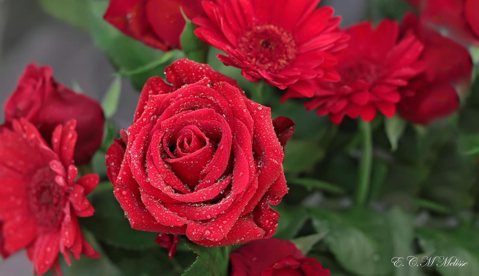 La Fleur Floreria - Envio el mismo dia: Arreglos de Flores