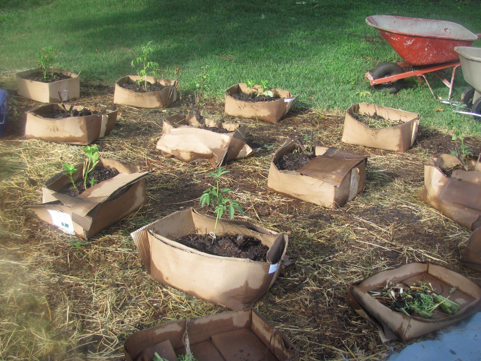 meinlessmatters my no till cardboard gardening method