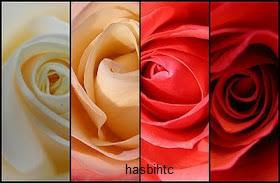 Arti Dari 6 Warna Bunga Mawar