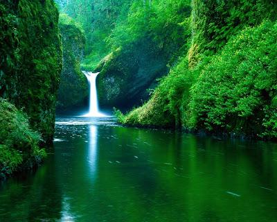 En güzel orman resimleri resimlerle ormanlarımız en güzel ormanlar