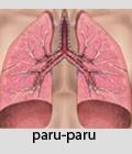 penyakit, radang paru-paru, radang