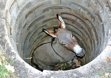 http://1.bp.blogspot.com/-42mjQhmJrcE/Tgq5aDkAyDI/AAAAAAAABvw/A2pU8Qoo28U/s1600/Donkey-1.jpg