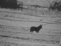 Schäferhunde Todesstreifen DDR
