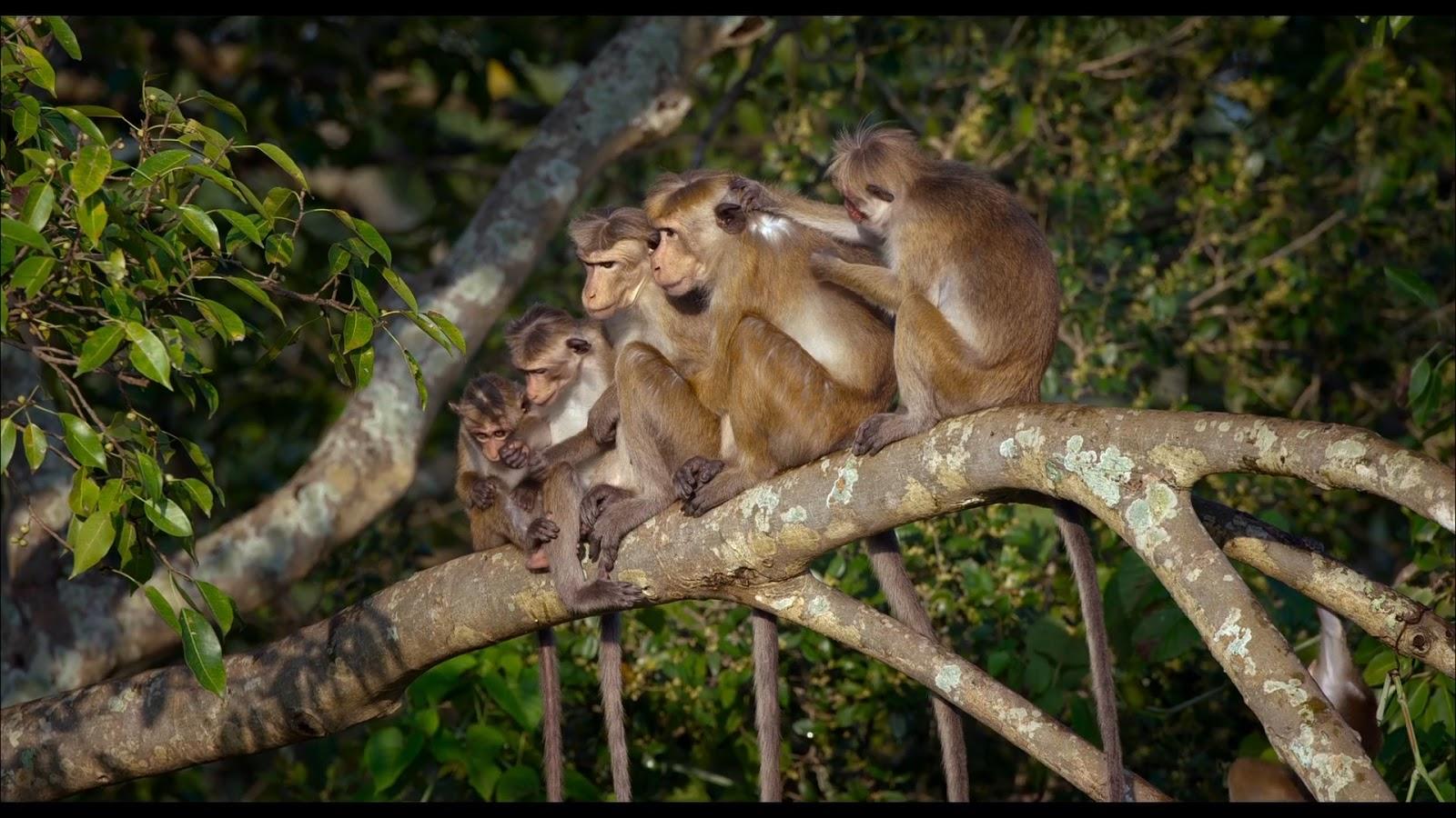 El Reino de los Monos BRrip 1080p Lat/Ing (2015)