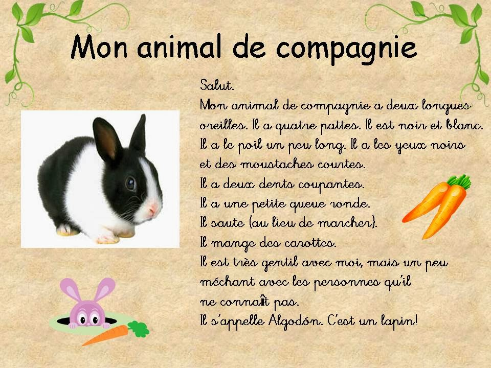 Fran ais pour souris description de mon animal de compagnie - Animal de compagnie appartement ...