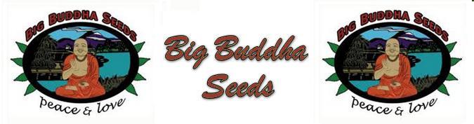 Buy Big Buddha Seeds Online