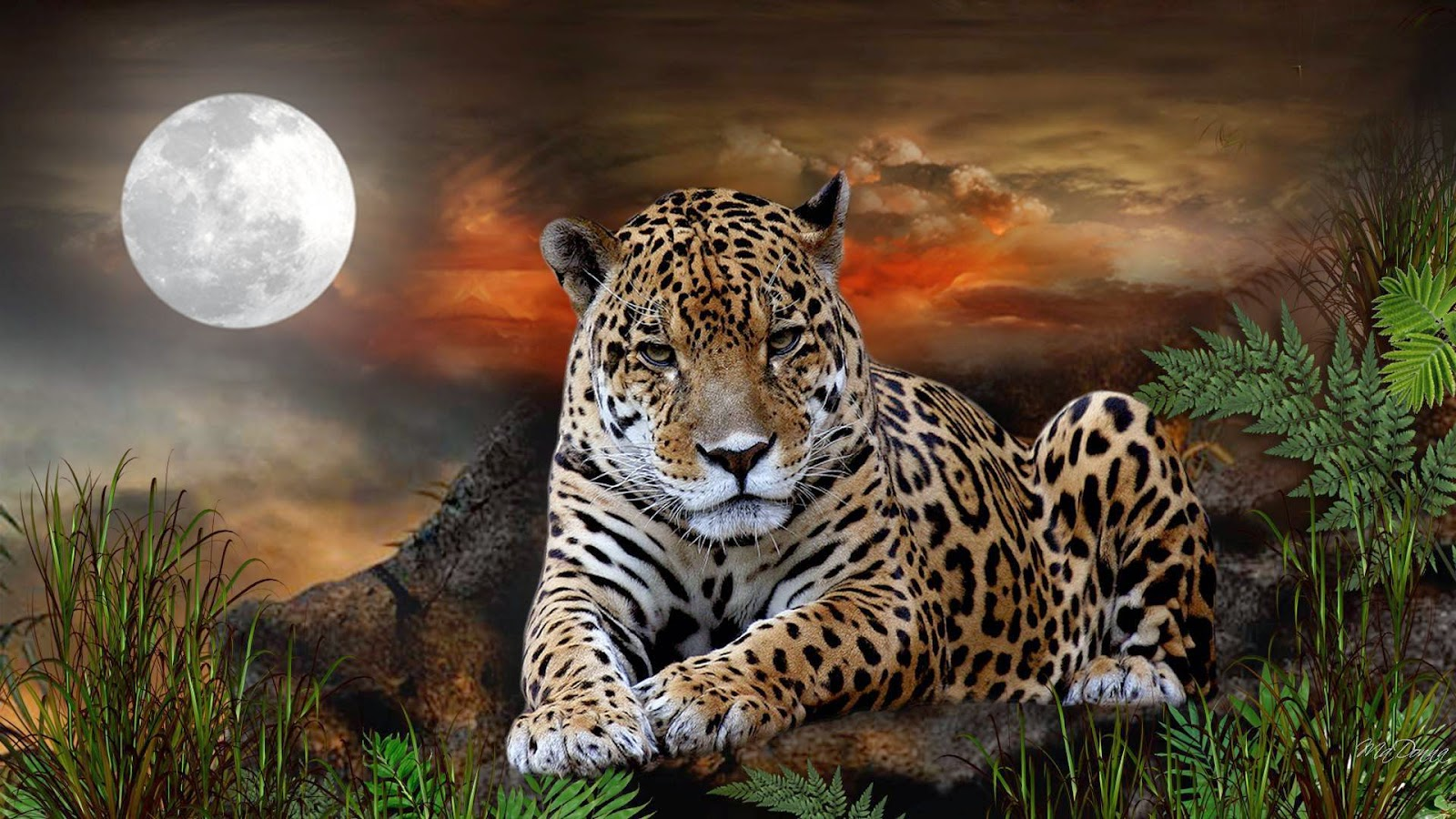 Jaguar Hd Desktop Background