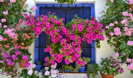 El espiritu de las plantas - Patios andaluces decoracion ...