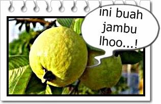 manfaat buah jambu