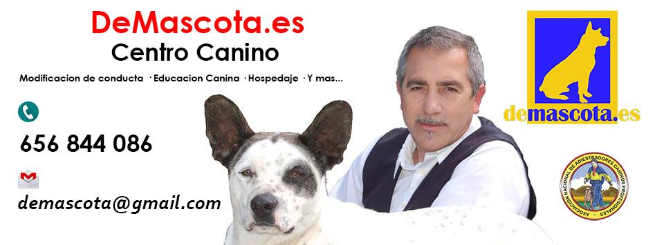 DeMascota.es <br> <hr> Educacion Canina Racional
